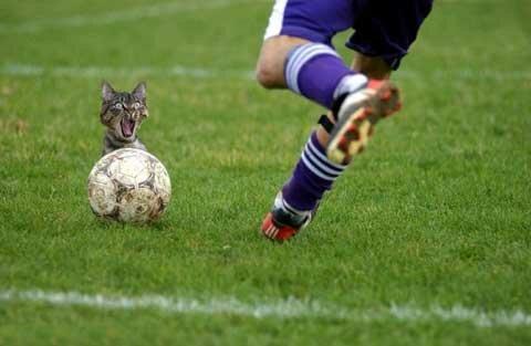 курьезы на футболе